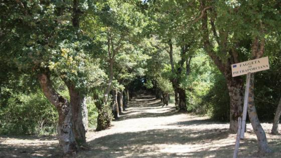 TREKKING VAL D'ORCIA • Trekking Pietraporciana
